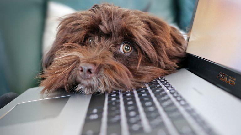 【初心者向け】アフィリエイトやブログに適したパソコンとは?